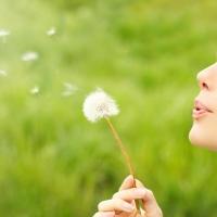 Leggyakoribb kérdések a pollenallergiáról