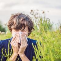 Parlagfű allergiára gyanakszom, mit tegyek?