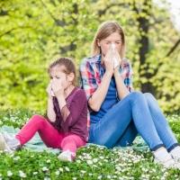 Fontos információ parlagfű allergiásoknak!