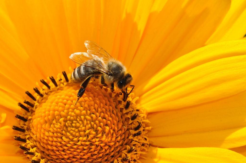 8 kérdés a rovarcsípés allergiáról