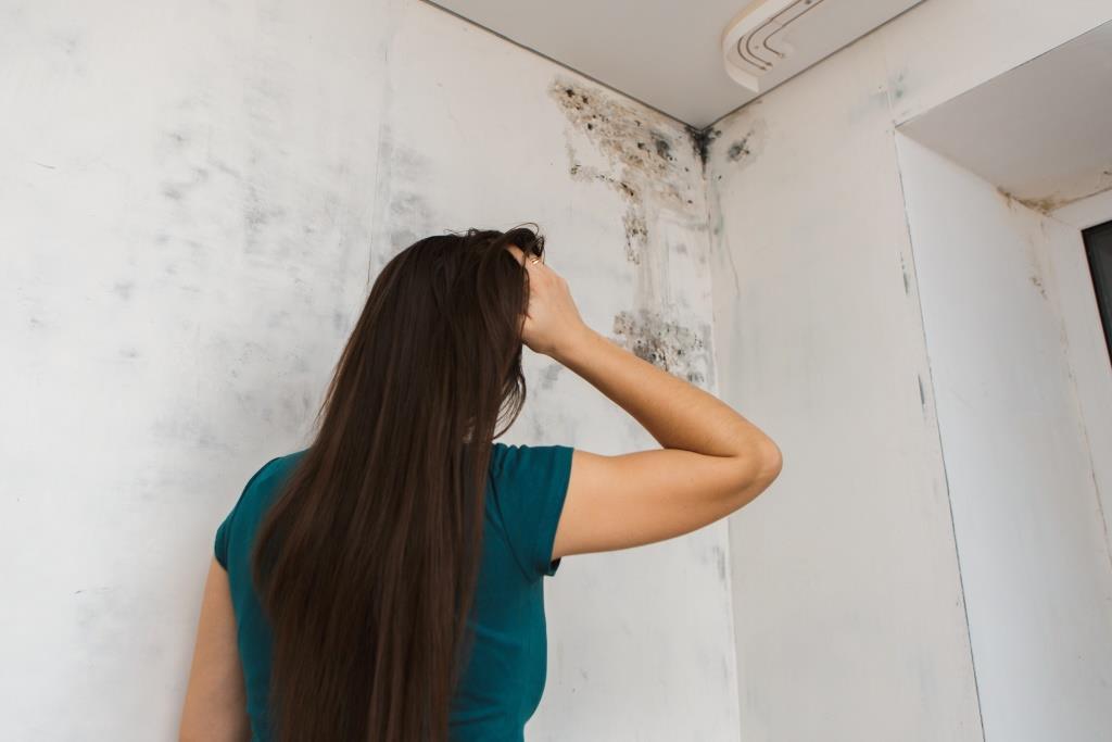 Nem mindegy, milyen gombától penészes a fal